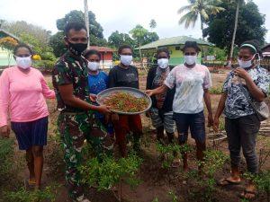 Satgas Yonif 125 Bersama Warga Panen Cabai di Kebun Pos Toray