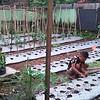 Berdayakan Lahan Kosong, Danramil 0829-08/Tragah Budidaya Ikan dan Sayuran