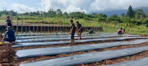 Satgas Yonif 131 dan Masyarakat Di Perbatasan RI-PNG Memanfaatkan Lahan Kosong Untuk Ketahanan Pangan