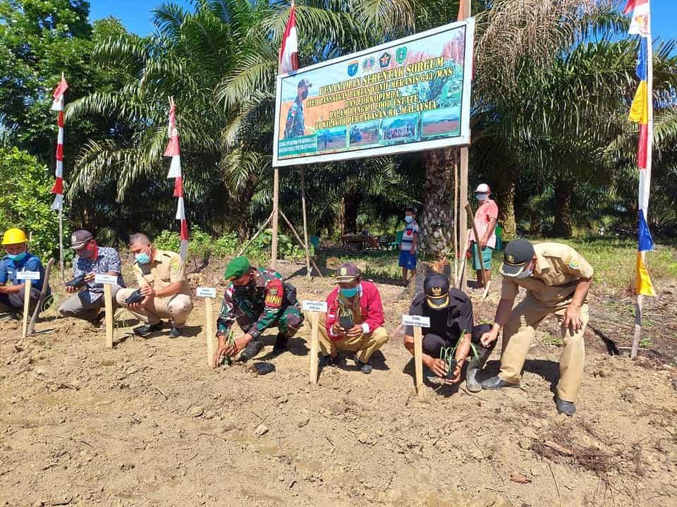 Sukseskan Program Food Estate, Satgas Yonif 643/Wns Menanam Sorgum Serentak di Wilayah Perbatasan.