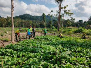 Bangun Ketahanan Pangan di Perbatasan, Satgas Yonarmed 6/3 Kostrad Manfaatkan Lahan Perkebunan