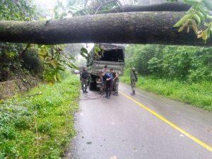 Satgas Yonif 403/WP Sigap Evakuasi Pohon Tumbang Di tengah Jalan Trans Papua Perbatasan RI-PNG
