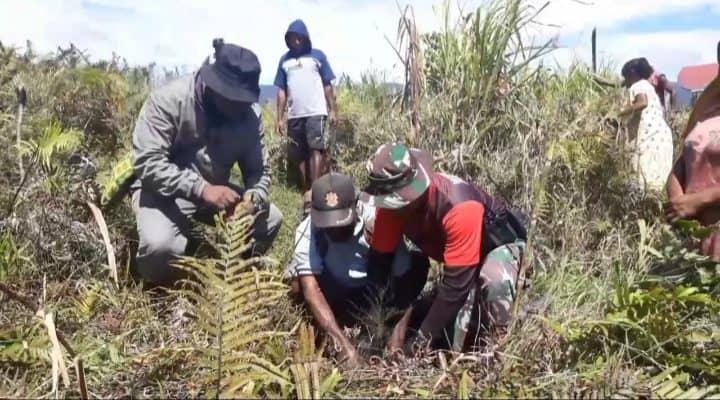 Lestarikan Lingkungan, Satgas Yonmek 403 Bersama Warga Tanam Pohon Pinus di Pegunungan Bintang Papua