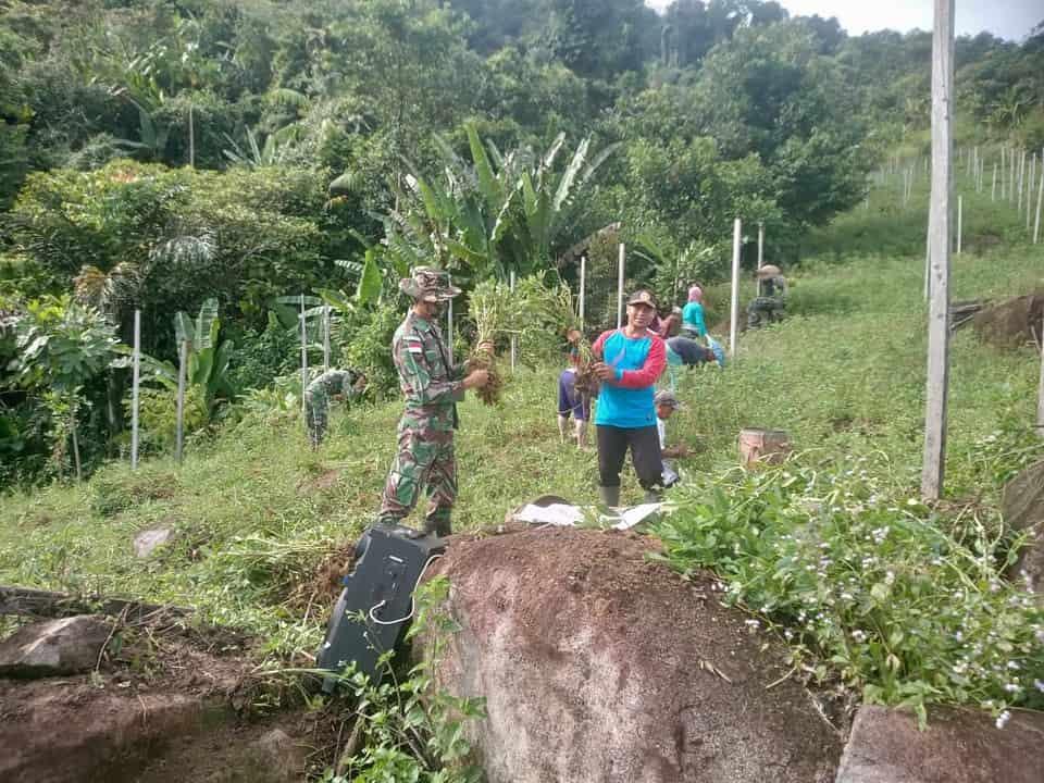 Satgas Pamtas Yonif Mekanis 643/Wns Bersama Masyarakat Perbatasan Panen Kacang Tanah