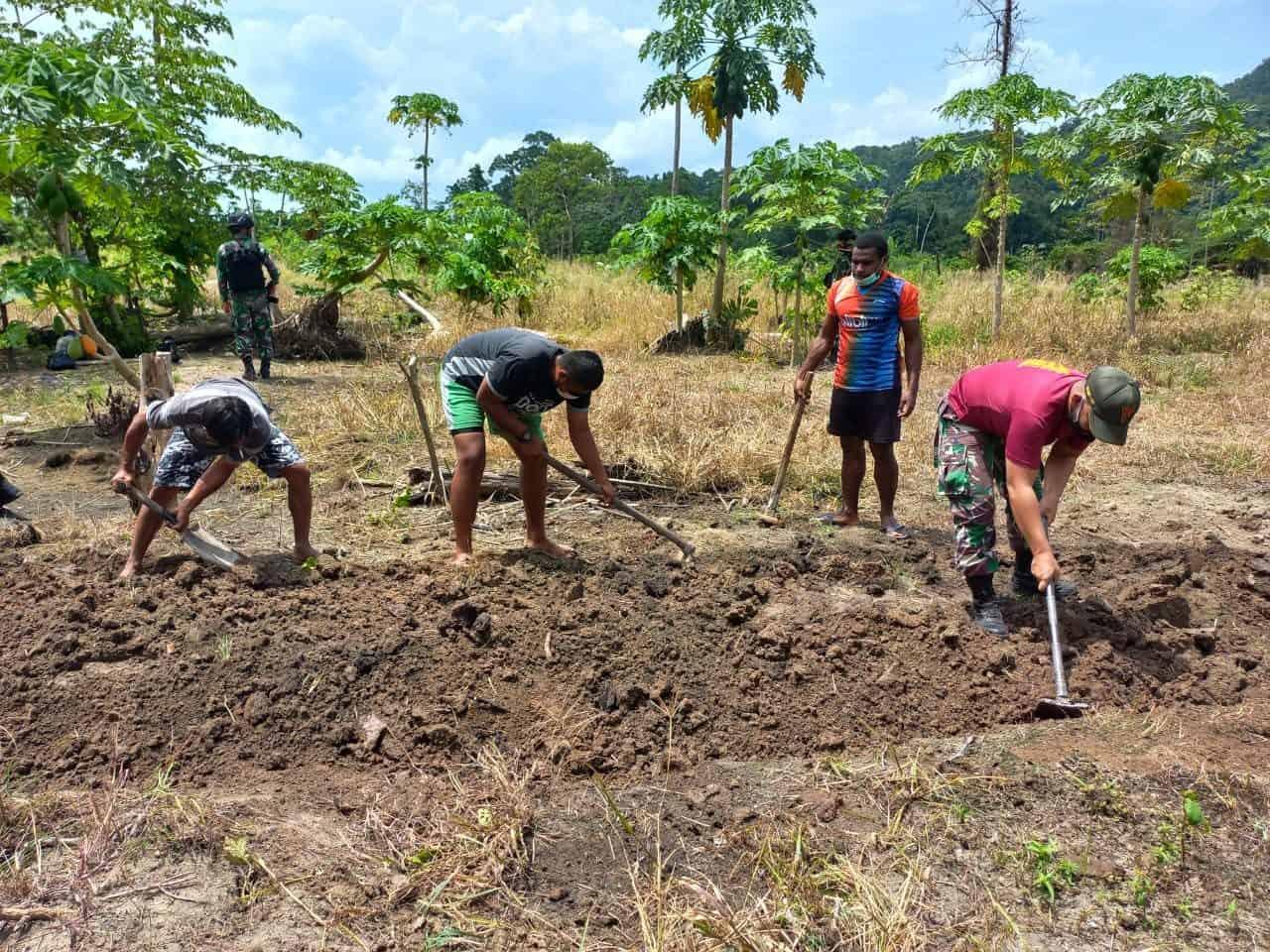 Dukung Ketahanan Pangan, Satgas Yonif 131/Brs dan Masyarakat Buat Kebun Sayuran di Papua