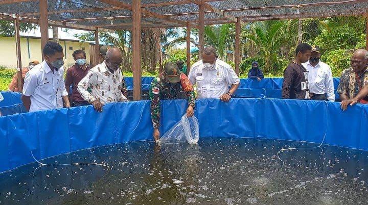 Satgas Yonif 131 Kembangkan Budidaya Ikan Lele Dengan Kolam Terpal di Papua